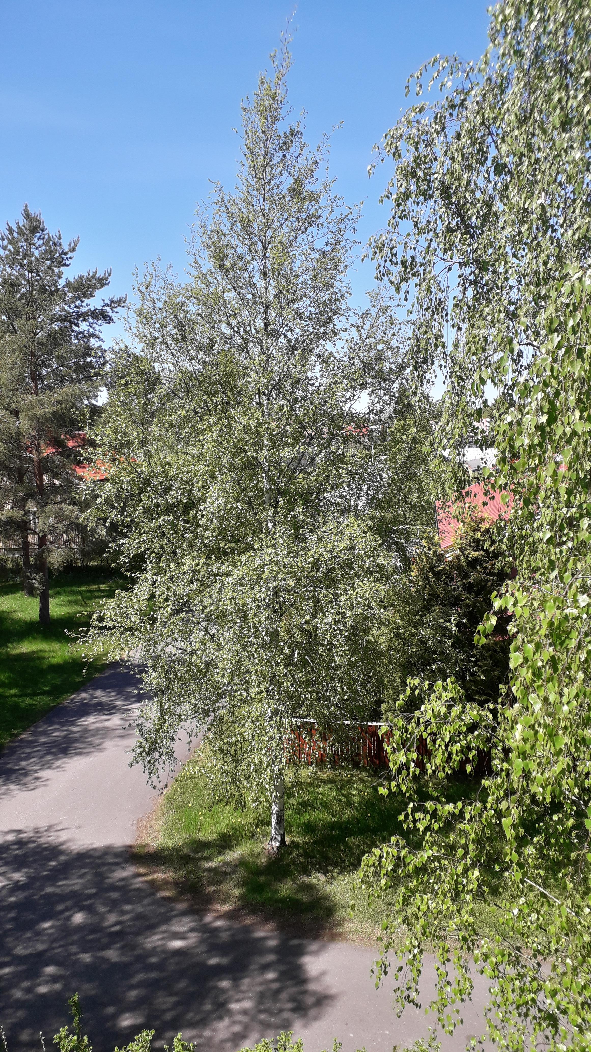 Nurmenpolku 8 A8, Loimaa